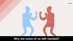 Why are some of us left-handed