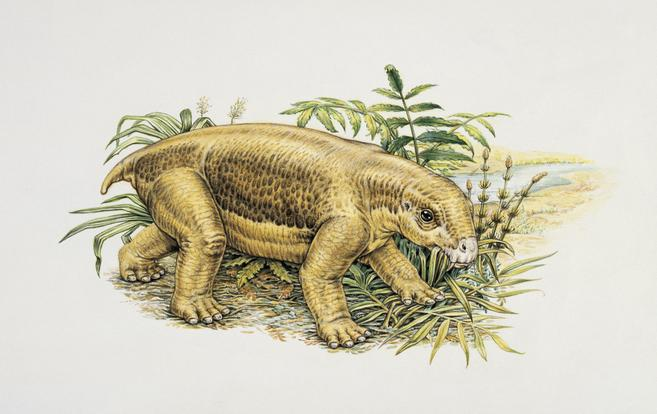 Lystrosaurus in a bush