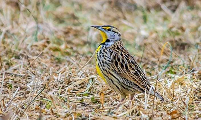 Birds' seasonal migrations shift earlier as climate changes