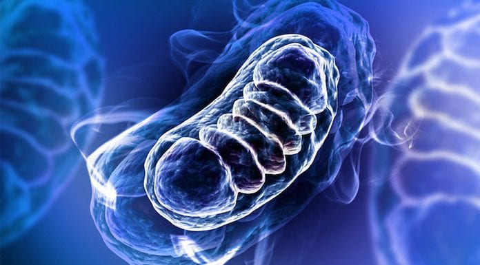 Mitochondria are the 'canary in the coal mine' for cellular stress