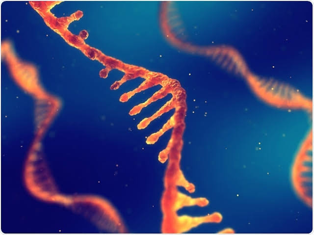 Scientists identify harmful bacteria based on its DNA at a very low cost