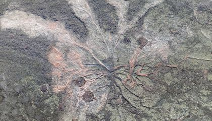 385-million-year-old forest discovered